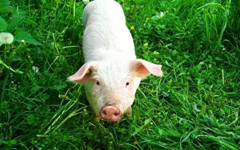 100日後に食われる豚の飼い主の正体は誰?